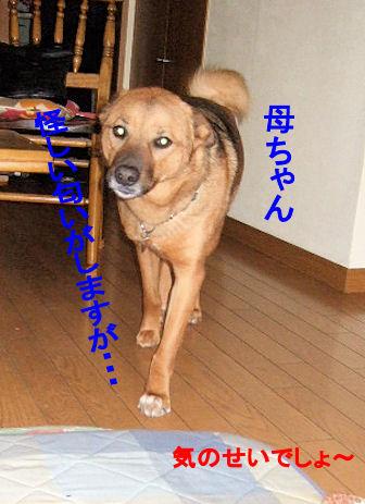 b0087400_0311182.jpg