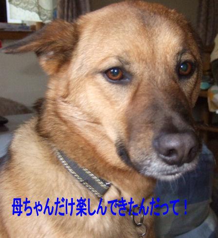 b0087400_0364941.jpg
