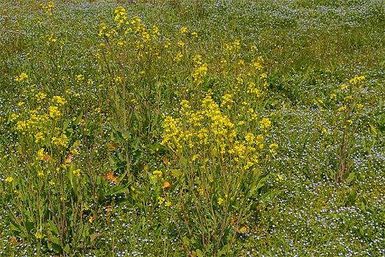 吉備路風土記の丘で春を満喫_d0001300_10215839.jpg