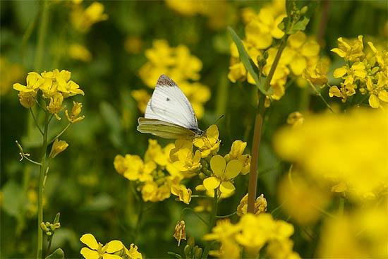 吉備路風土記の丘で春を満喫_d0001300_10221191.jpg