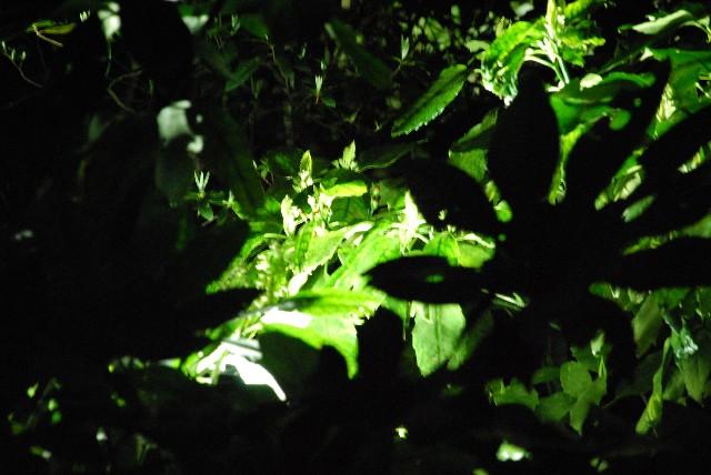 六義園の夜桜 2/2_e0019200_22132663.jpg