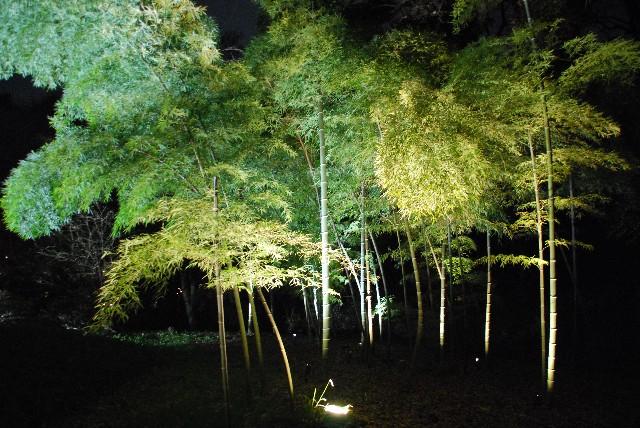 六義園の夜桜 2/2_e0019200_22141586.jpg