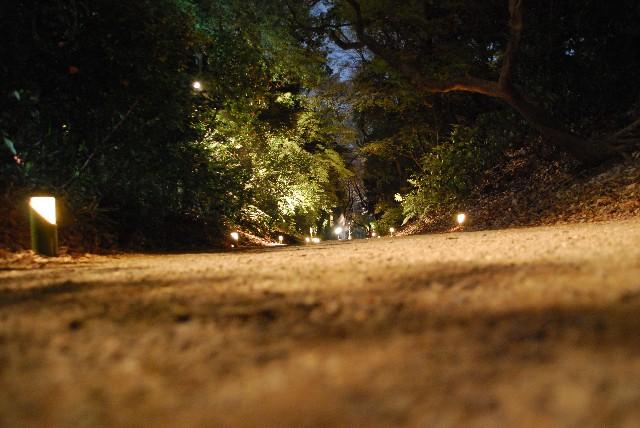 六義園の夜桜 2/2_e0019200_22164762.jpg