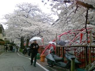 目黒川の桜♪_d0091909_17264852.jpg