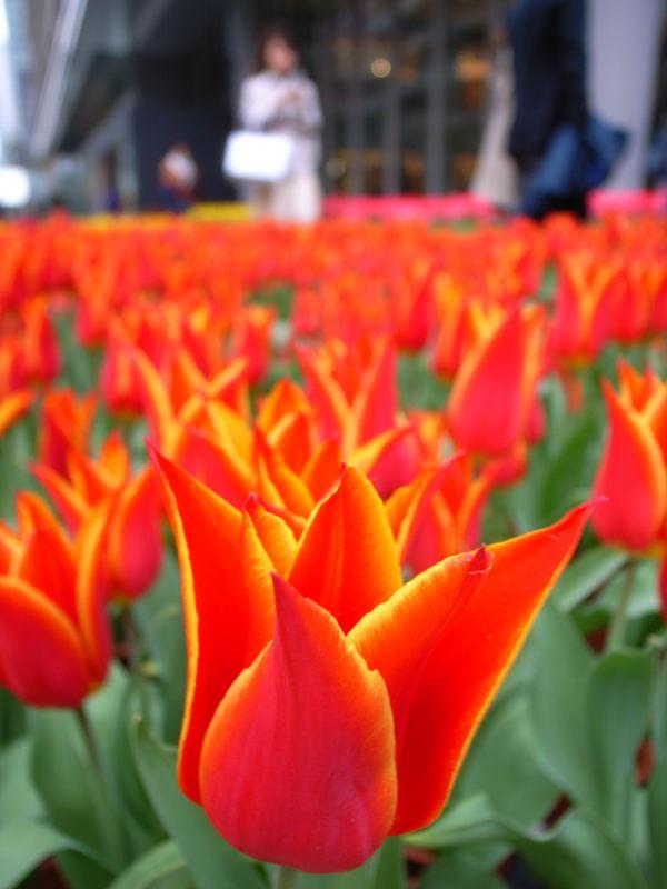 春が来たぁ~_e0004009_015056.jpg
