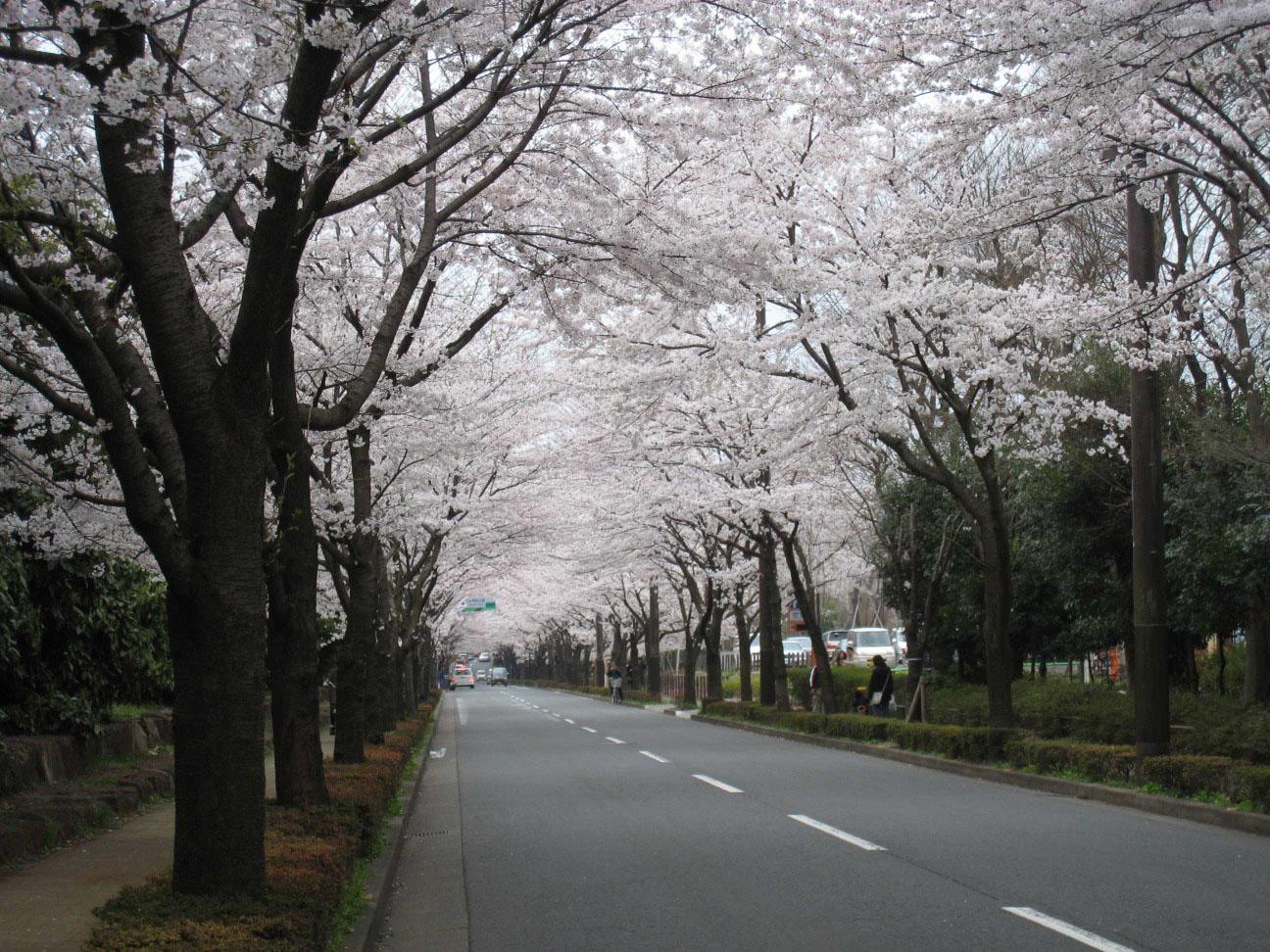 桜を撮りに・・・_f0141609_17432426.jpg