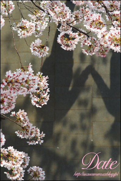 お花見デート_f0100215_01544.jpg