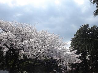 新宿御苑_c0025217_11215567.jpg