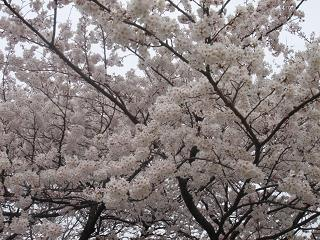 新宿御苑_c0025217_11223798.jpg
