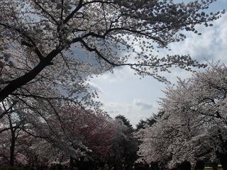 新宿御苑_c0025217_1122422.jpg