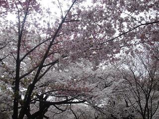 新宿御苑_c0025217_11234352.jpg