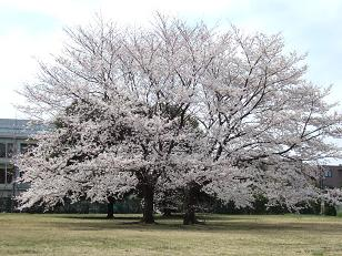 春を喜ぶ_f0085219_18365682.jpg