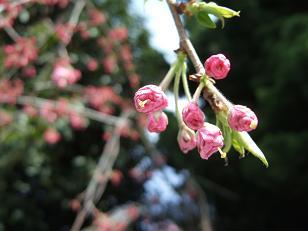 春を喜ぶ_f0085219_1932723.jpg