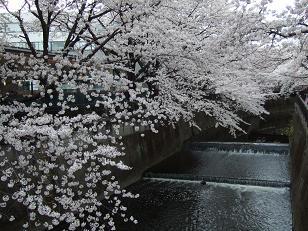 春を喜ぶ_f0085219_19371643.jpg