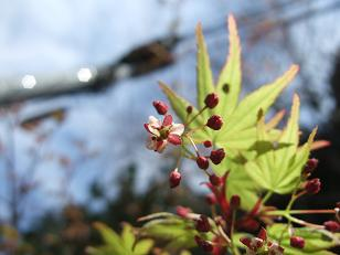 春を喜ぶ_f0085219_193947.jpg