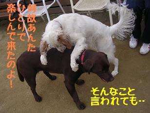 b0113725_16255575.jpg