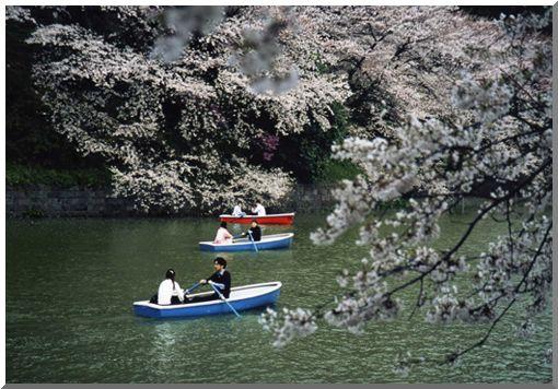 春爛漫・さくら (ストックより投稿)_d0123528_16271615.jpg