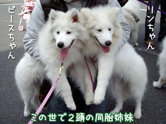 アジアインターナショナル・ドッグショー_c0062832_1254228.jpg
