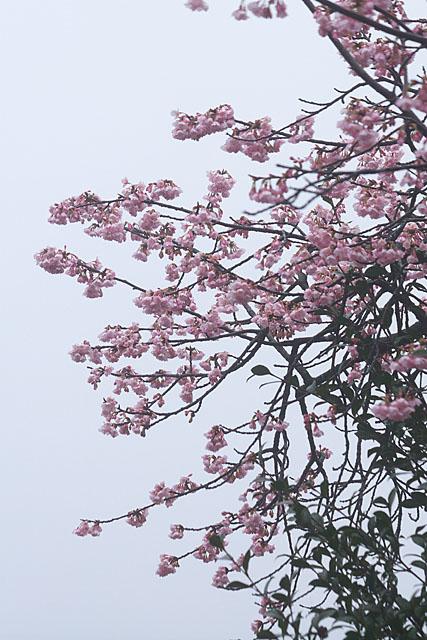 めぐみ公園の桜_c0067040_2282641.jpg