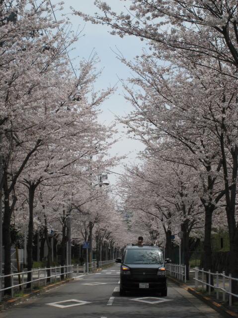 お花見ドライブ_c0157047_12142647.jpg