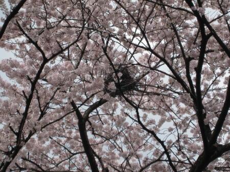 お花見ドライブ_c0157047_12172411.jpg