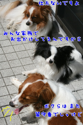 d0013149_0284629.jpg