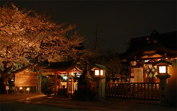 牛天神の夜桜_a0003650_23152614.jpg