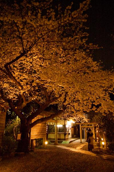 牛天神の夜桜_a0003650_2317313.jpg