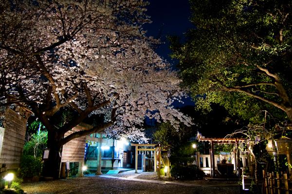牛天神の夜桜_a0003650_23181544.jpg
