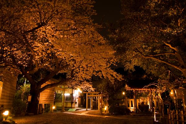 牛天神の夜桜_a0003650_2319611.jpg