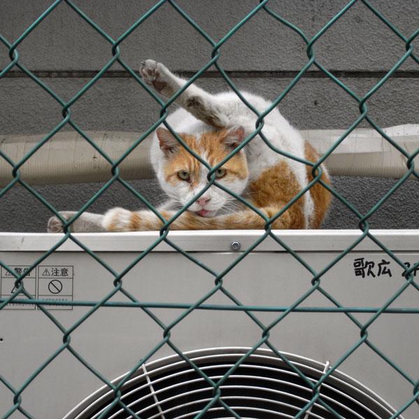 四季の道の猫 - 新宿_f0117059_21544088.jpg