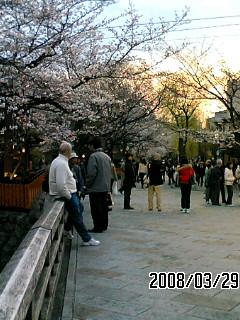 祇園は桜咲いてました。_f0103760_14332443.jpg