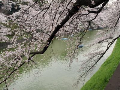 桜咲く_e0126063_20261475.jpg