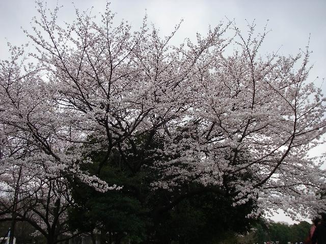 花冷え_a0074069_15271497.jpg