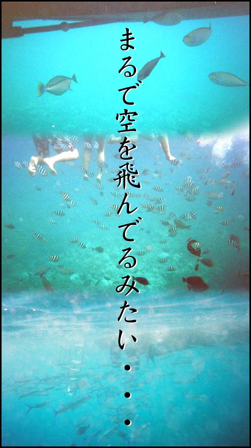 グァム→3/20☆スノーケリング_f0119369_2148274.jpg