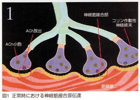 ボツリヌス毒素 : 心療整形外科
