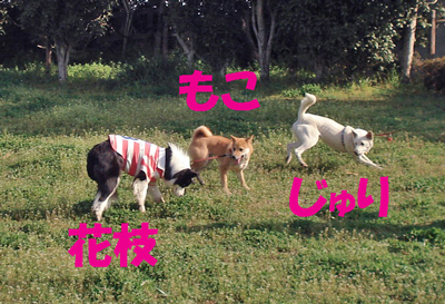f0132070_1523262.jpg