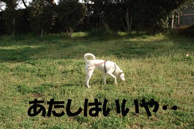 f0132070_1545041.jpg
