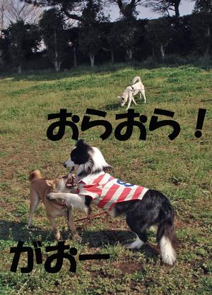 f0132070_1554813.jpg