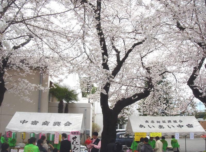 連日のお花見_f0059673_2342667.jpg