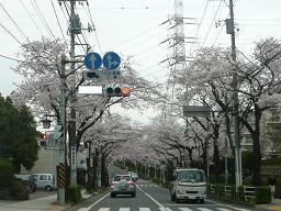 春真っ盛り~_b0112380_11235029.jpg