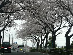 春真っ盛り~_b0112380_11244827.jpg