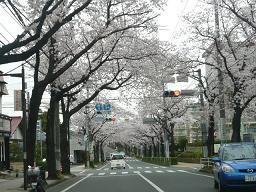 春真っ盛り~_b0112380_11252780.jpg
