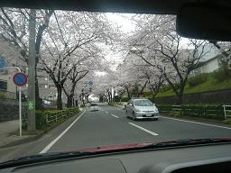春真っ盛り~_b0112380_11255480.jpg