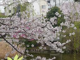 春真っ盛り~_b0112380_1127166.jpg