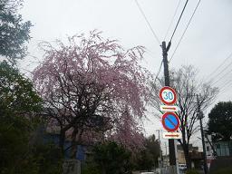 春真っ盛り~_b0112380_11273766.jpg