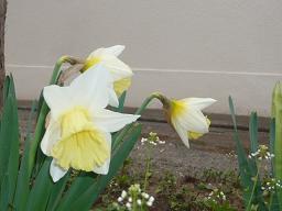 春真っ盛り~_b0112380_11284944.jpg