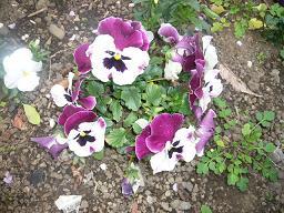 春真っ盛り~_b0112380_11292151.jpg