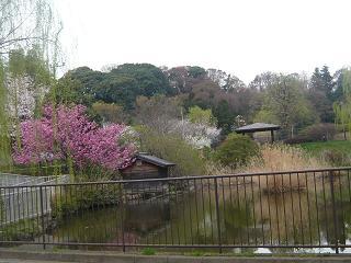 春真っ盛り~_b0112380_1130564.jpg