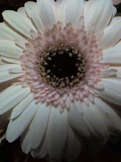 花冷え/ flower_d0090888_22314372.jpg